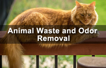Animal Waste and Odor Removal by On Call Bio Michigan